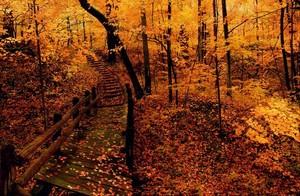 have a beautiful autumn Ellen🌹♥