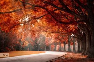 have a sweet autumn ma berni!!🌹
