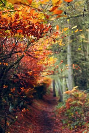 hello Autumn♥ღ