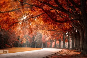 hello Autumn♥ღ
