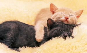 hugs and naps