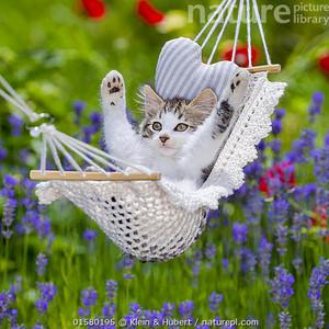 it's hammock time