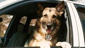 k-9 police anjing