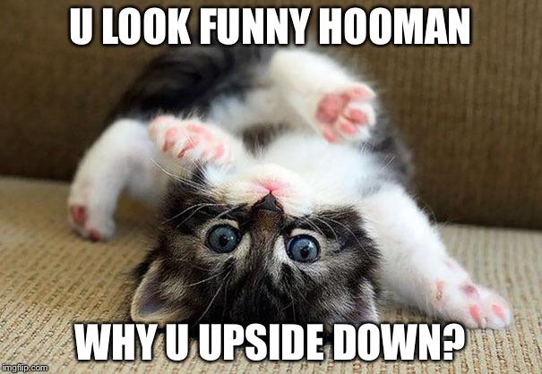Kitten Memes Anak Kucing Comel Foto 41532001 Fanpop Page 145
