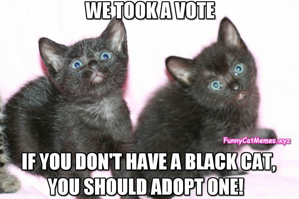 Kitten Memes Cute Kittens Photo 41532018 Fanpop