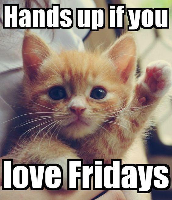 Kitten Memes Cute Kittens Photo 41535489 Fanpop