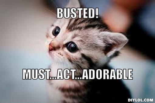 Kitten Memes Kittens Photo 41531979 Fanpop