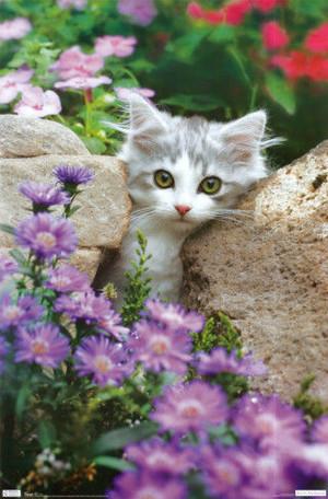 gatitos and flores