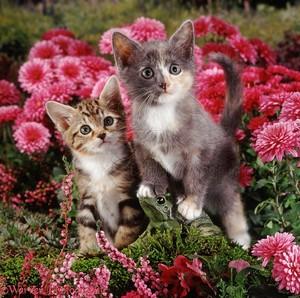 anak kucing and Bunga