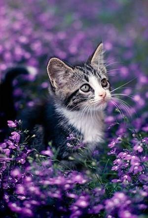 kittens and bunga