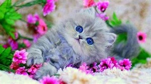 chatons and fleurs