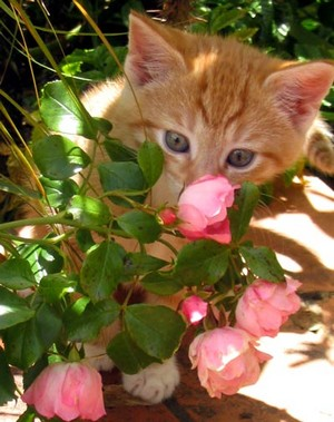 고양이 and 꽃