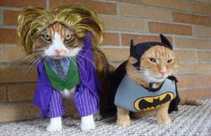 kittens in costume