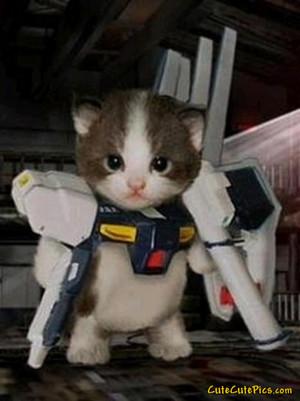 Kätzchen in costume