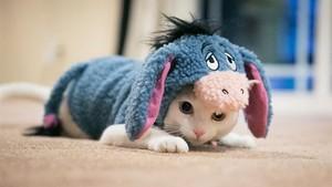 kittens in costume