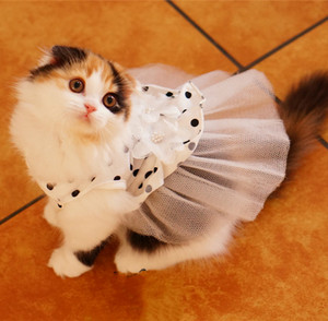 gatitos in costume