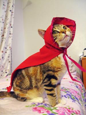 gatinhos in costume