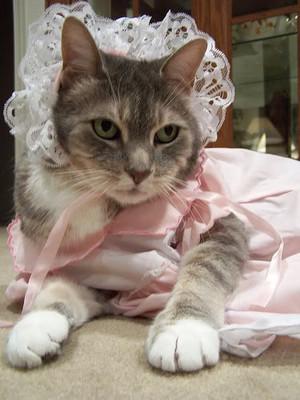 mèo con in costume