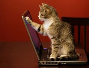 小猫 online