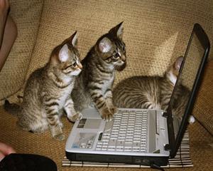 kittens online