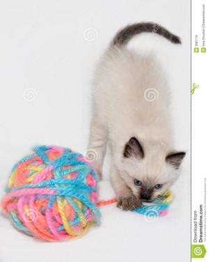 子猫 playing with yarn