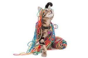 小猫 playing with yarn
