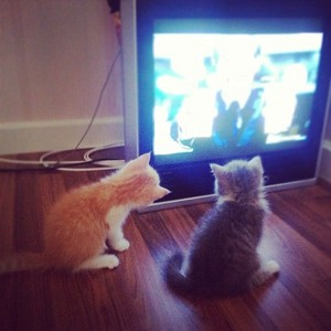gatitos watching tv