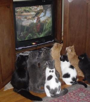 mga kuting watching tv