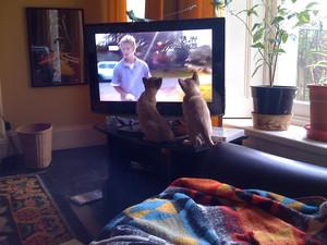 anak kucing watching tv