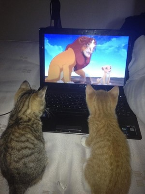 kittens watching tv