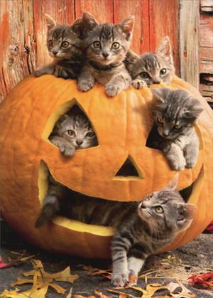 kitties and pumpkins