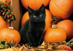 kitties and pumpkins