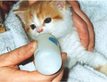 kitties drinking from bottle - cute-kittens photo