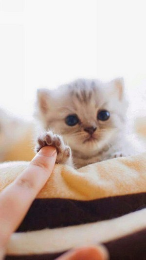 kitty high five