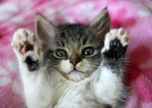 kitty double high five
