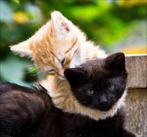 kitty tình yêu