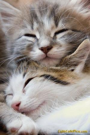 kitty Liebe