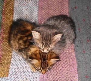 kitty 爱情