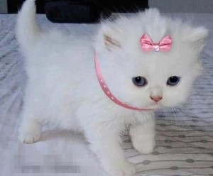 kitty princess