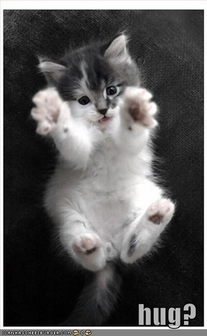 kitty wants a hug