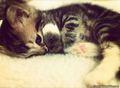 kittynap - cute-kittens photo