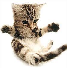 lovable kitties
