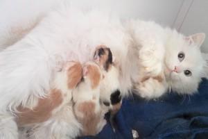 mama and baby kittens