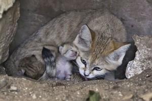 mama and baby mèo con