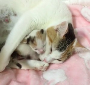 mama and baby kittens