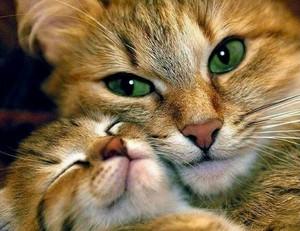 mama and baby Котята