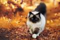 meow ~sweet autumn cat🌹♥