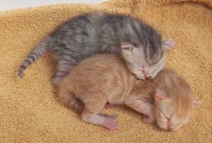 newborn kitties