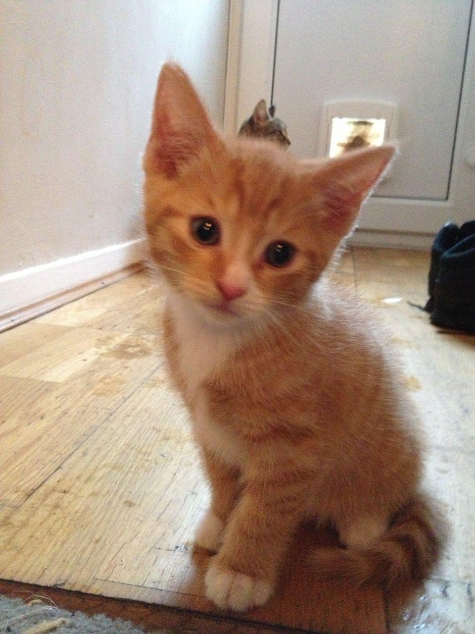 Orange Tabby Kittens Cute Kittens Photo 41521093 Fanpop