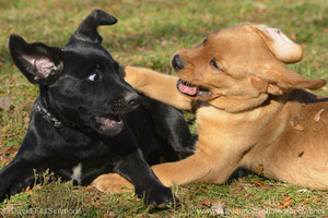 playful puppies